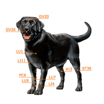 Dog Acupressure (not Acupuncture) Resources - Lucky Dog Health