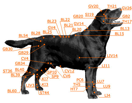 Dog Acurpessure Chart Side